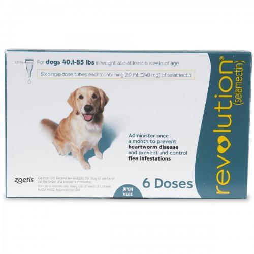 Revolution Canine Teal 20-40kg (6) <br> $182.40
